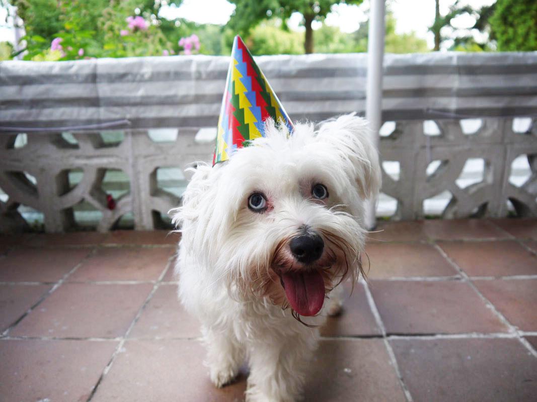 Hundegeburtstag – Krusty wurde 2!