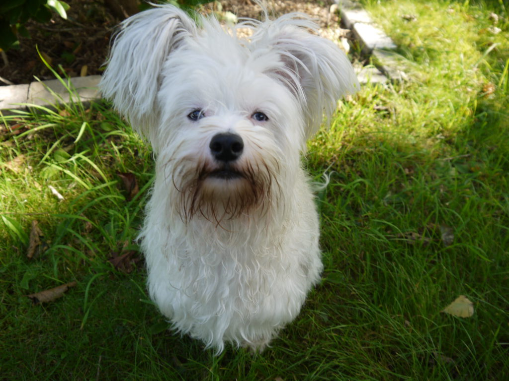 Checkliste Hundekauf - Kosten