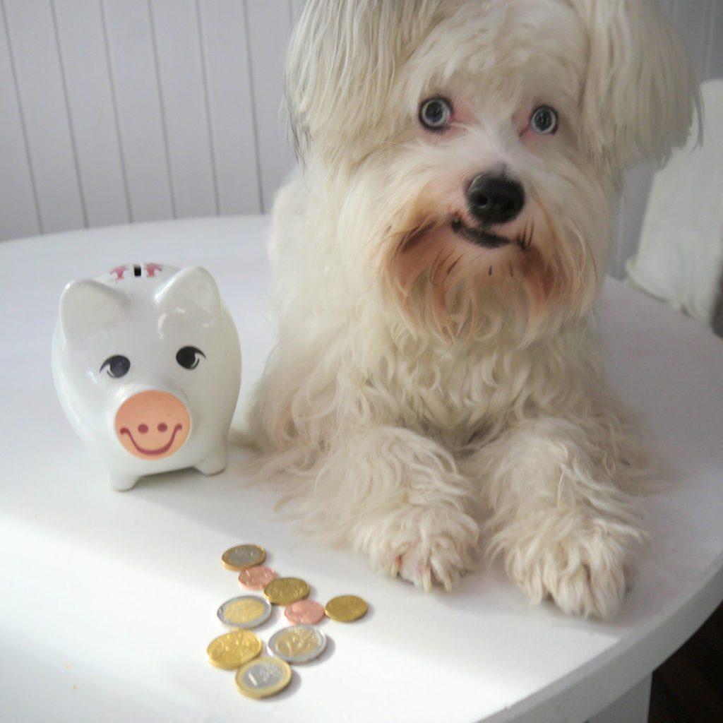 Checkliste Hundekauf Kosten