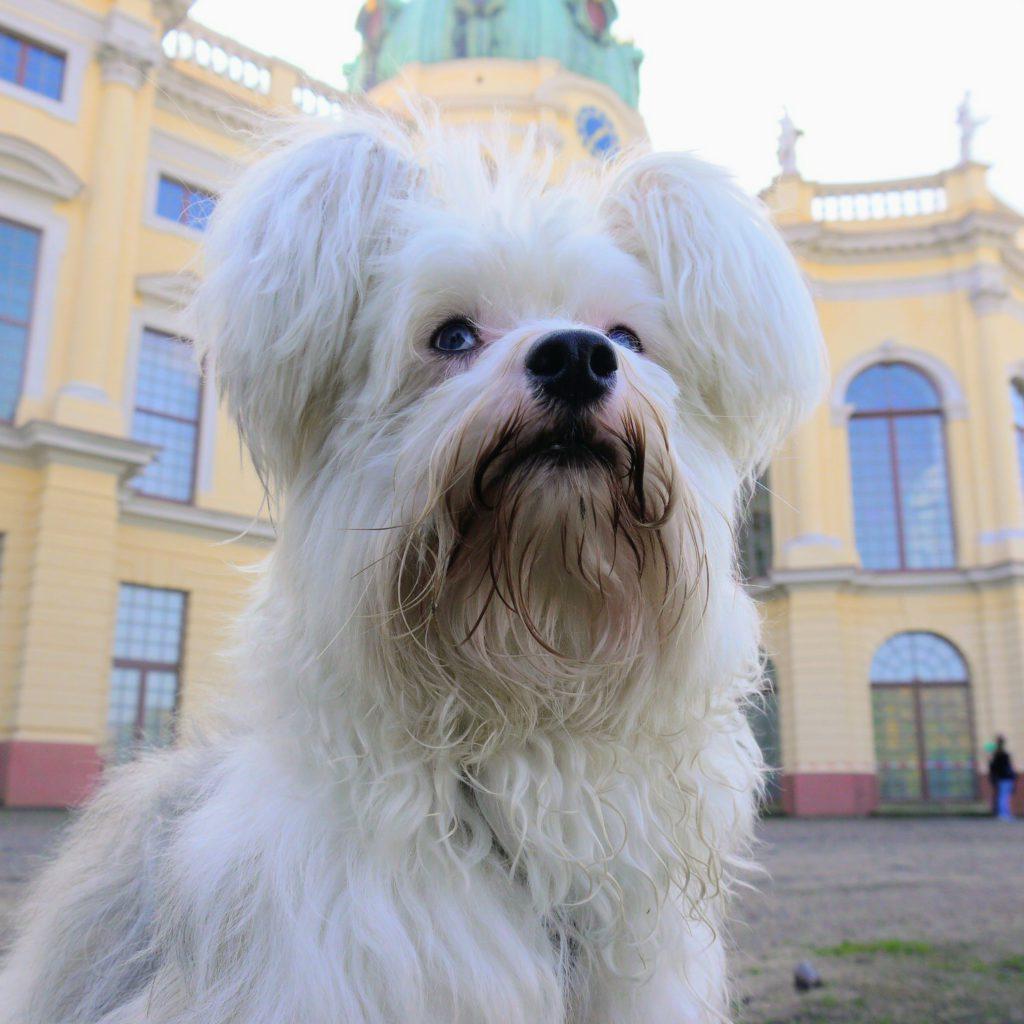 Krusty vorm Schloss Charlottenburg