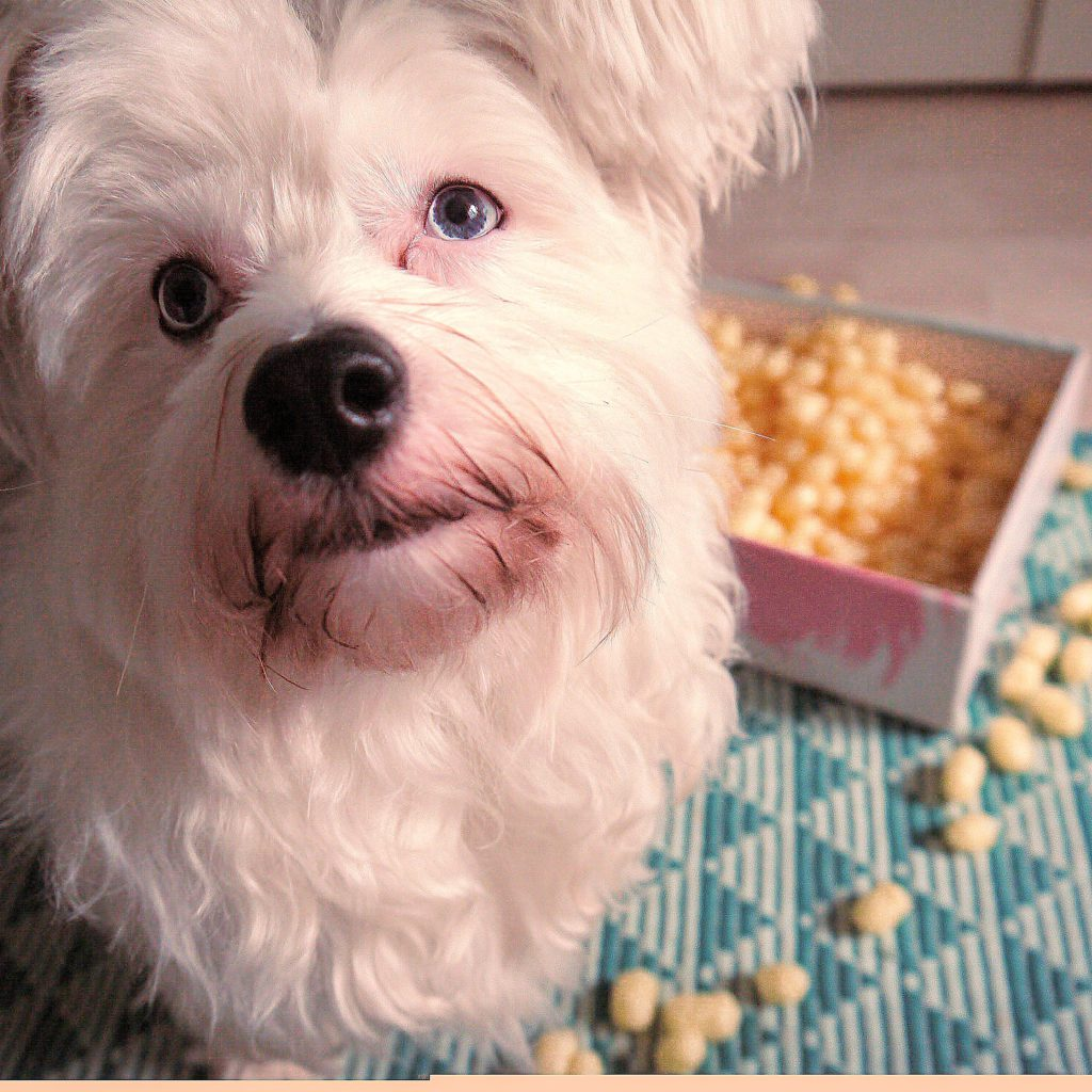 3 geniale Schnüffelspiele für zu Hause Powderpuff Krusty