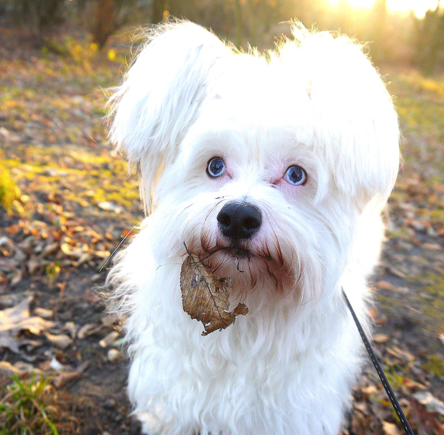 Checkliste Hundekauf – 5 allgemeine Bedingungen