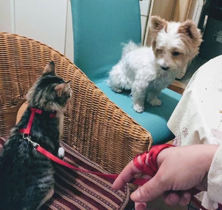 Powder Puff Krusty Hundeblog