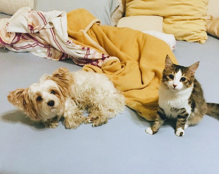 Interview: Hund und Katze aneinander gewöhnen