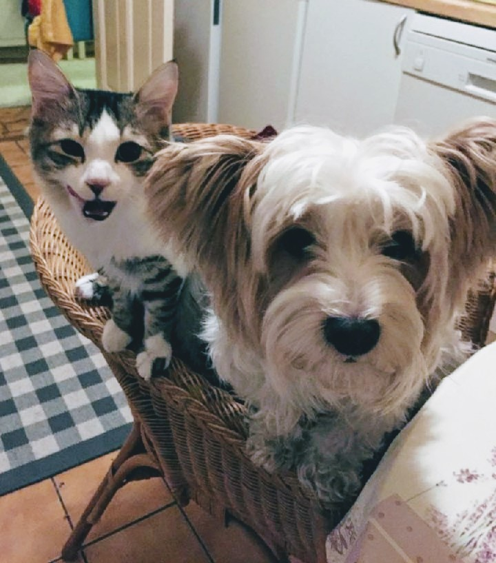 Hundeblog Krusty